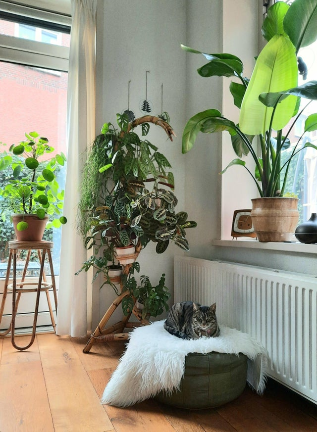 gato recostado rodeado de plantas