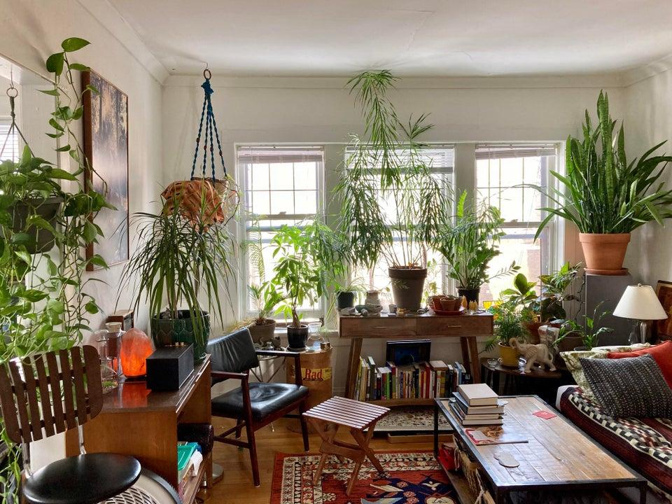 salón lleno de plantas
