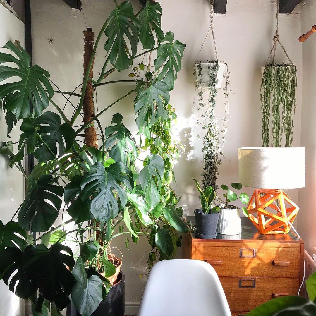 rincones encantadores con plantas