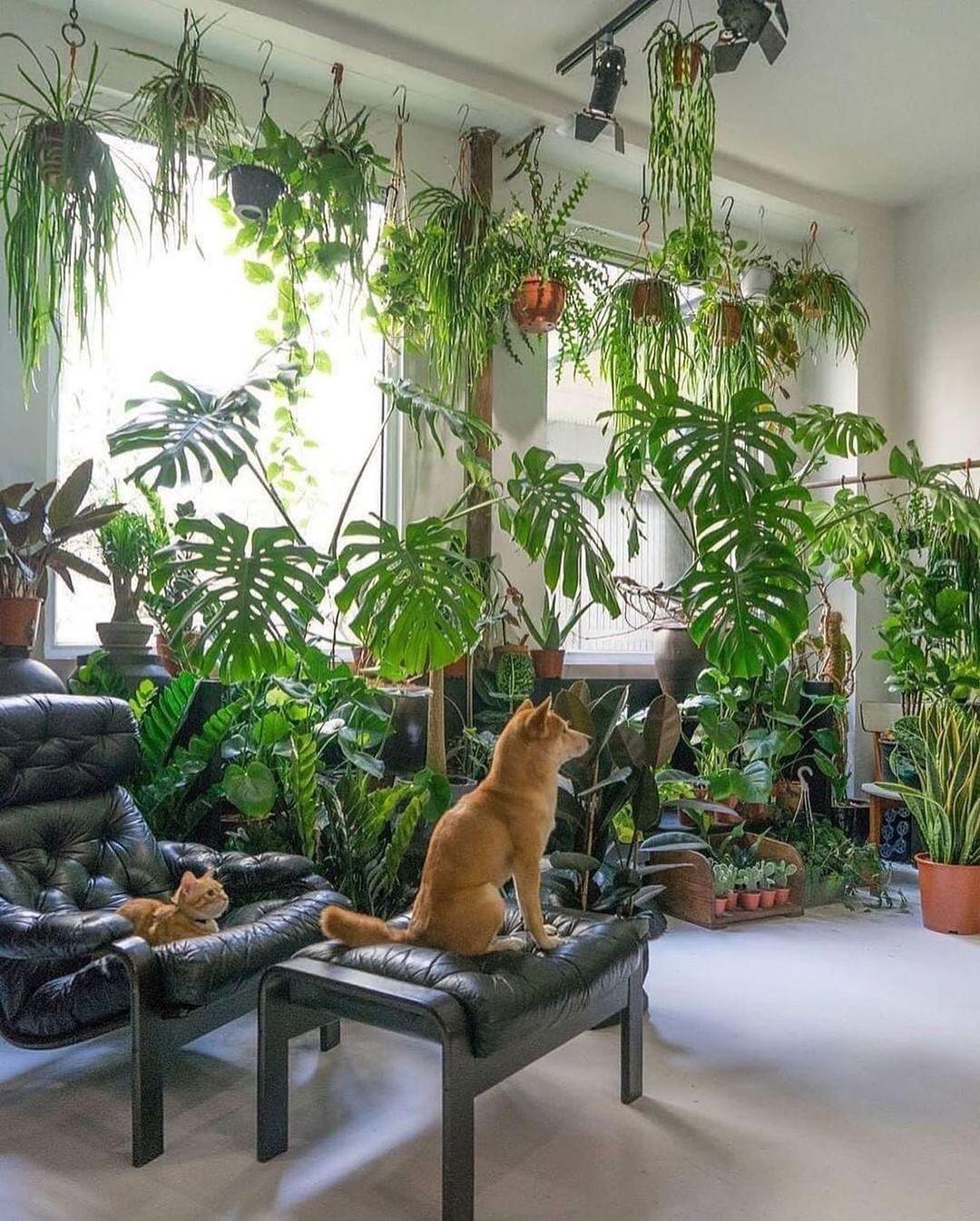 gato observando las plantas