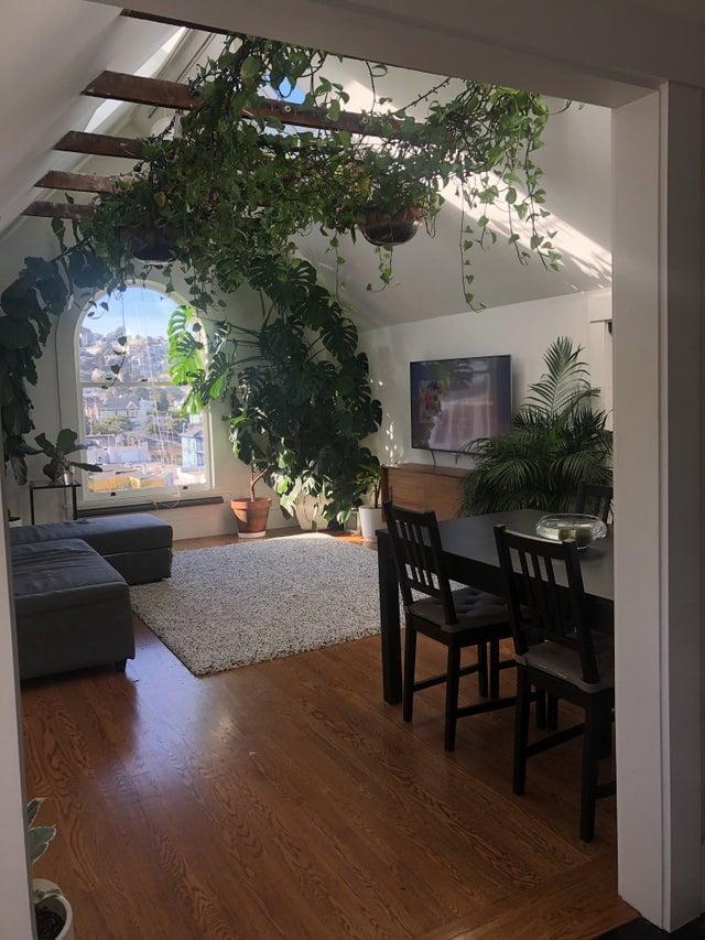 plantas trepadoras en el salón