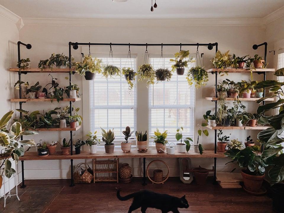 rincón de plantas