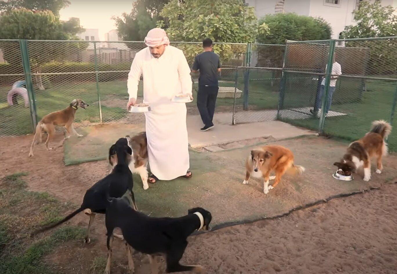 hombre dando de comer perros