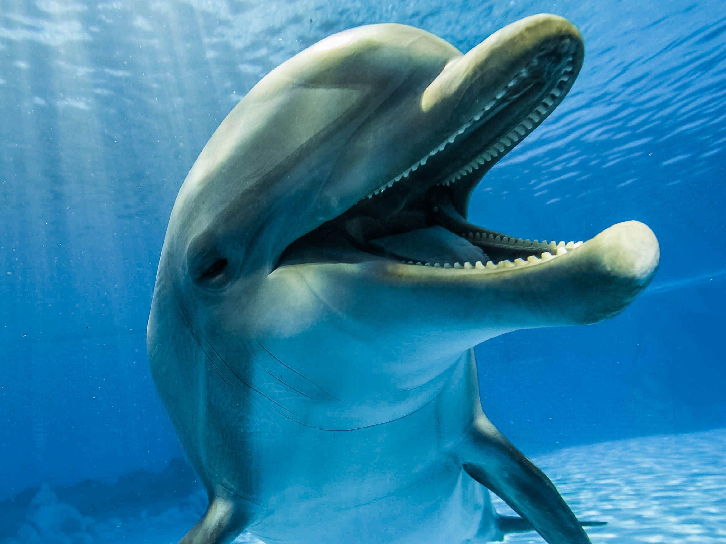 delfin nariz de botella