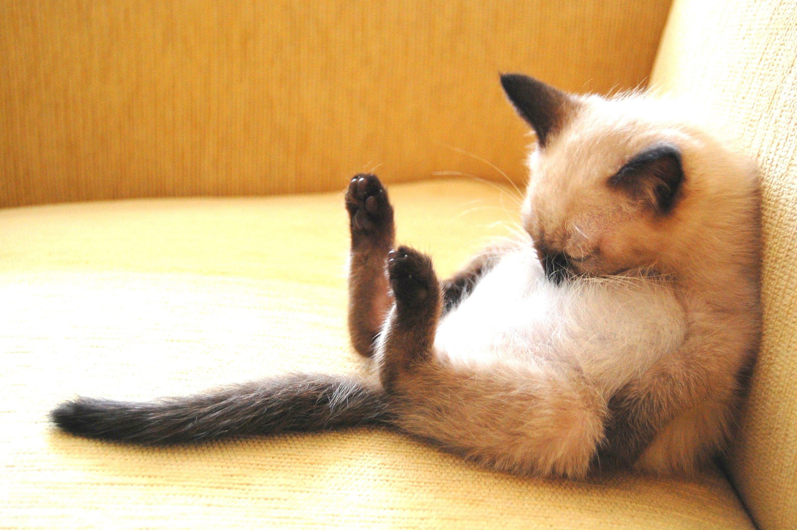 gato apoyado durmiendo
