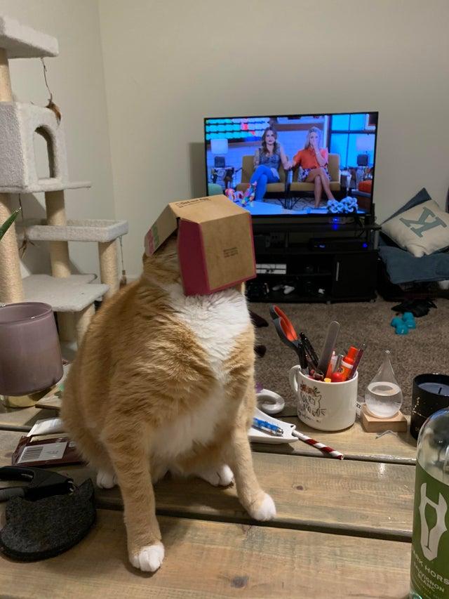 gato caja McDonalds