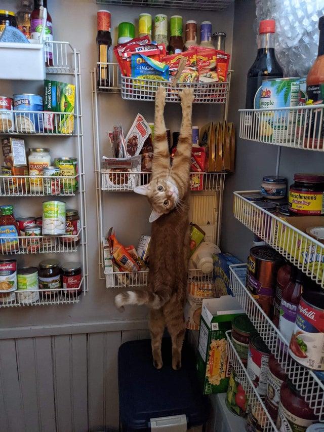 gato cazado en el acto