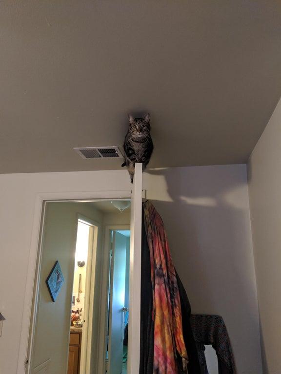 gato encima puerta