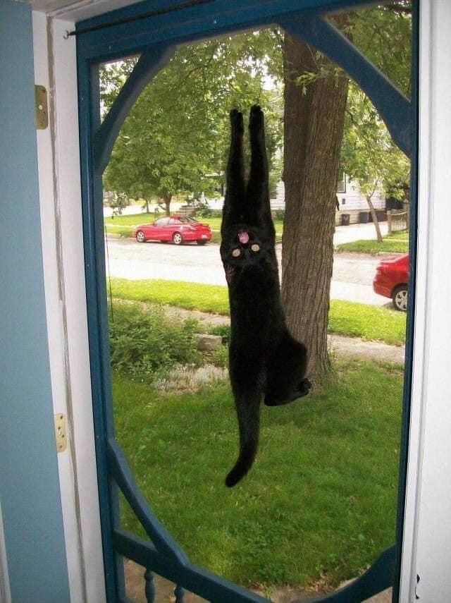 gato endiablado
