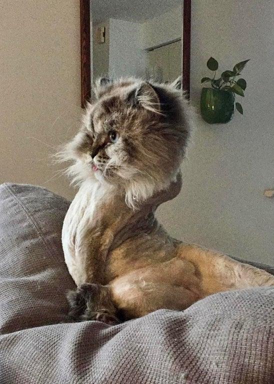 gato forma extraña