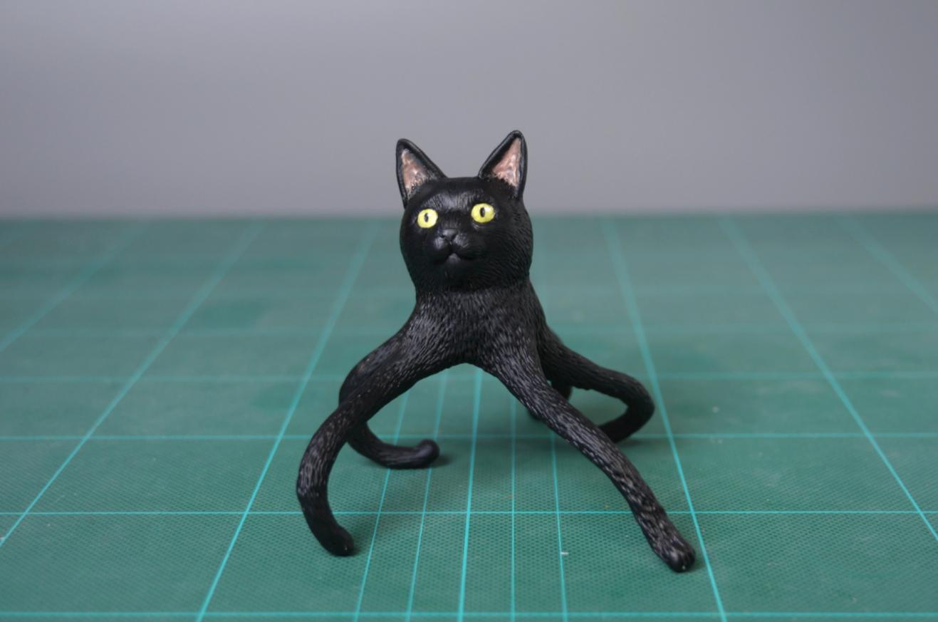 gato pulpo 2