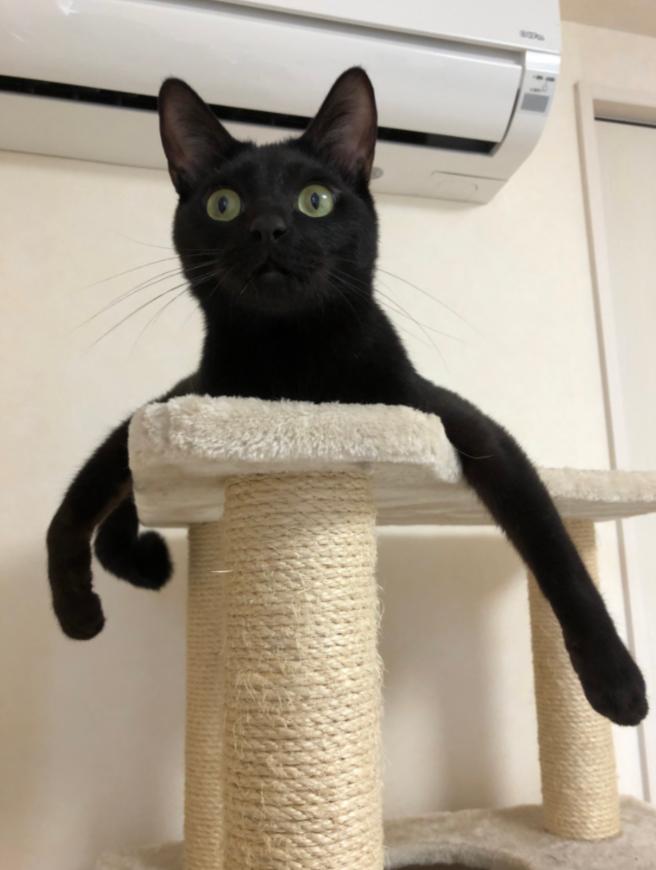 gato pulpo