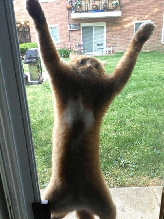 gato quiere entrar