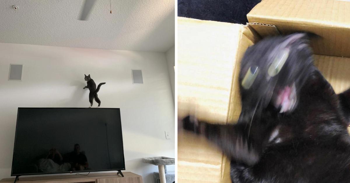 gatos-locos