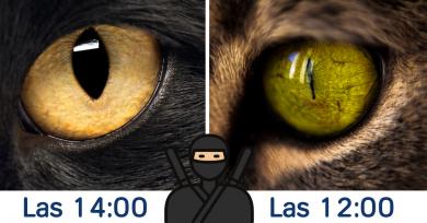 hora-mirar-ojos-gato