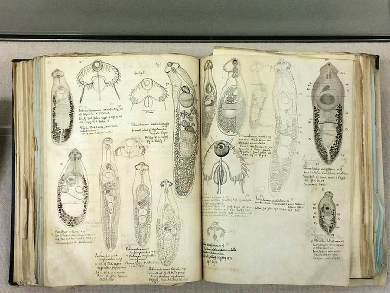 libro parasitologia