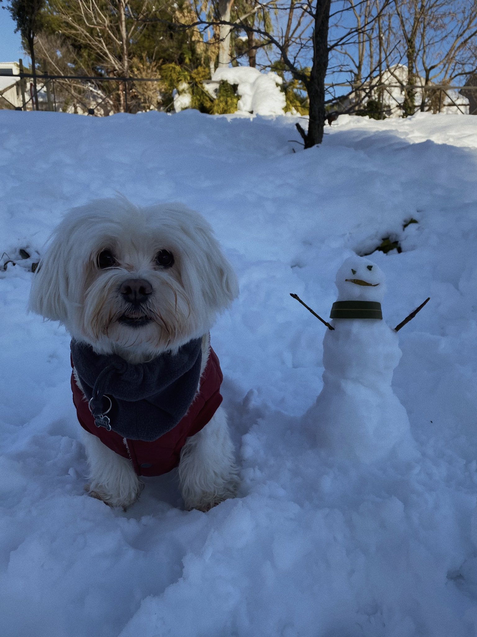 perro con muñeco de nieve