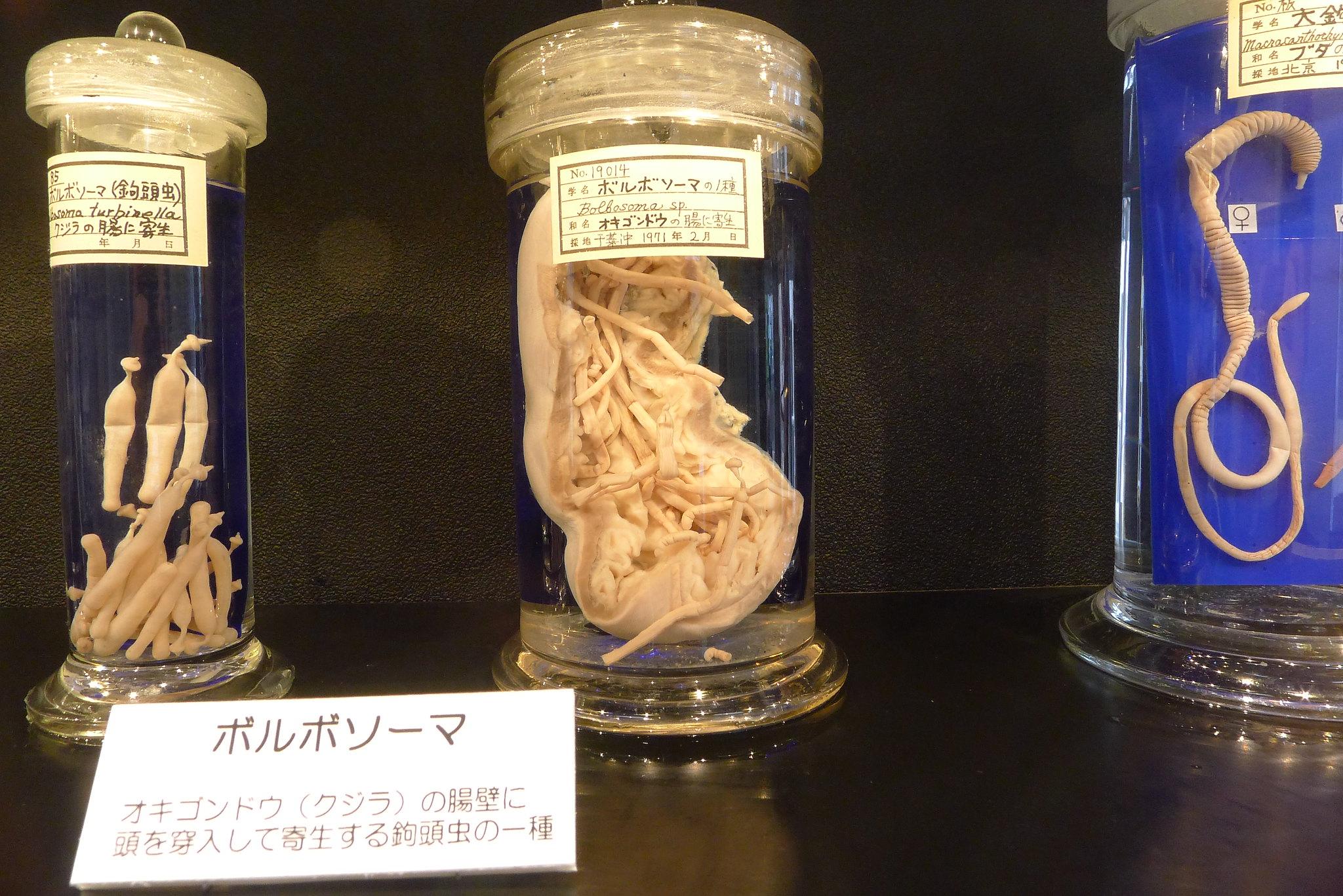 parasitos en tarros 2