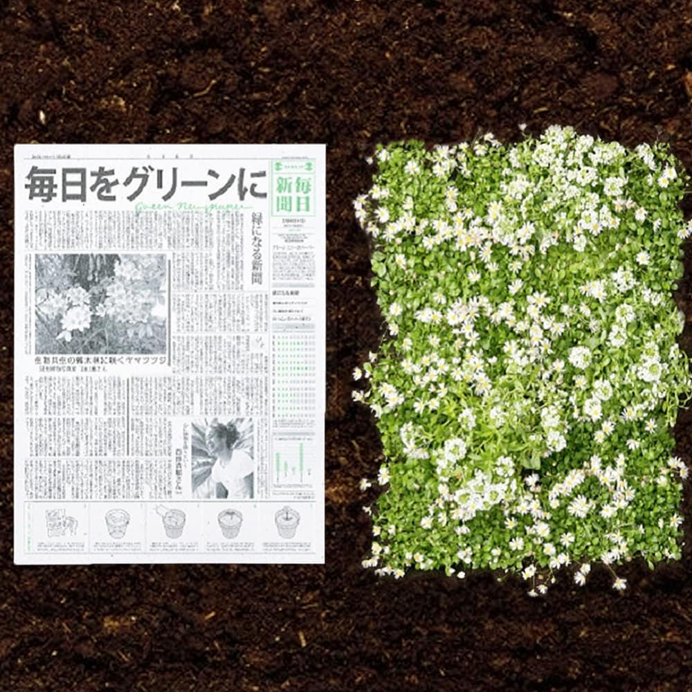 periodico ecologico