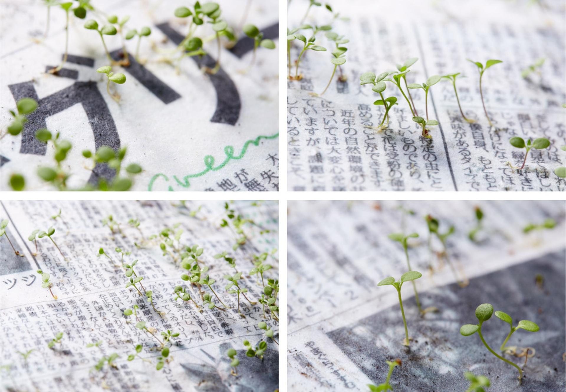 periodico japones