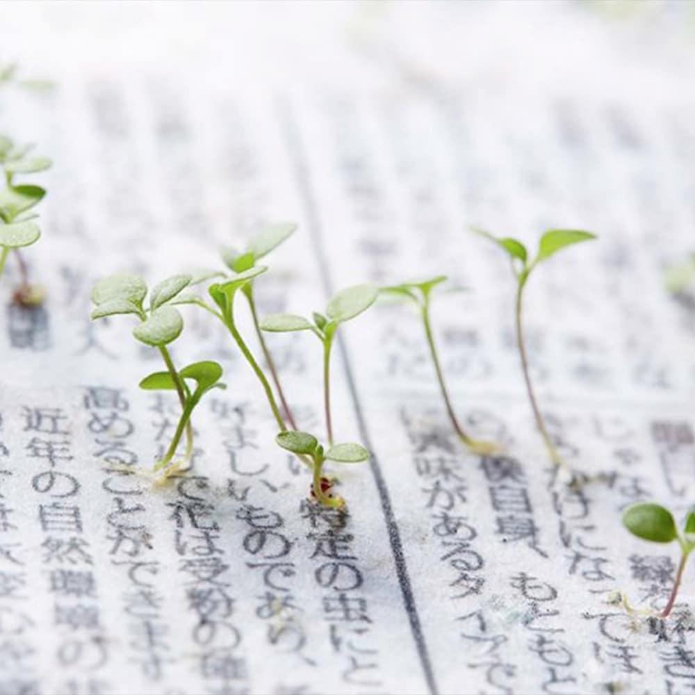 plantas periodico
