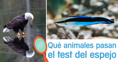 test-espejo-animales