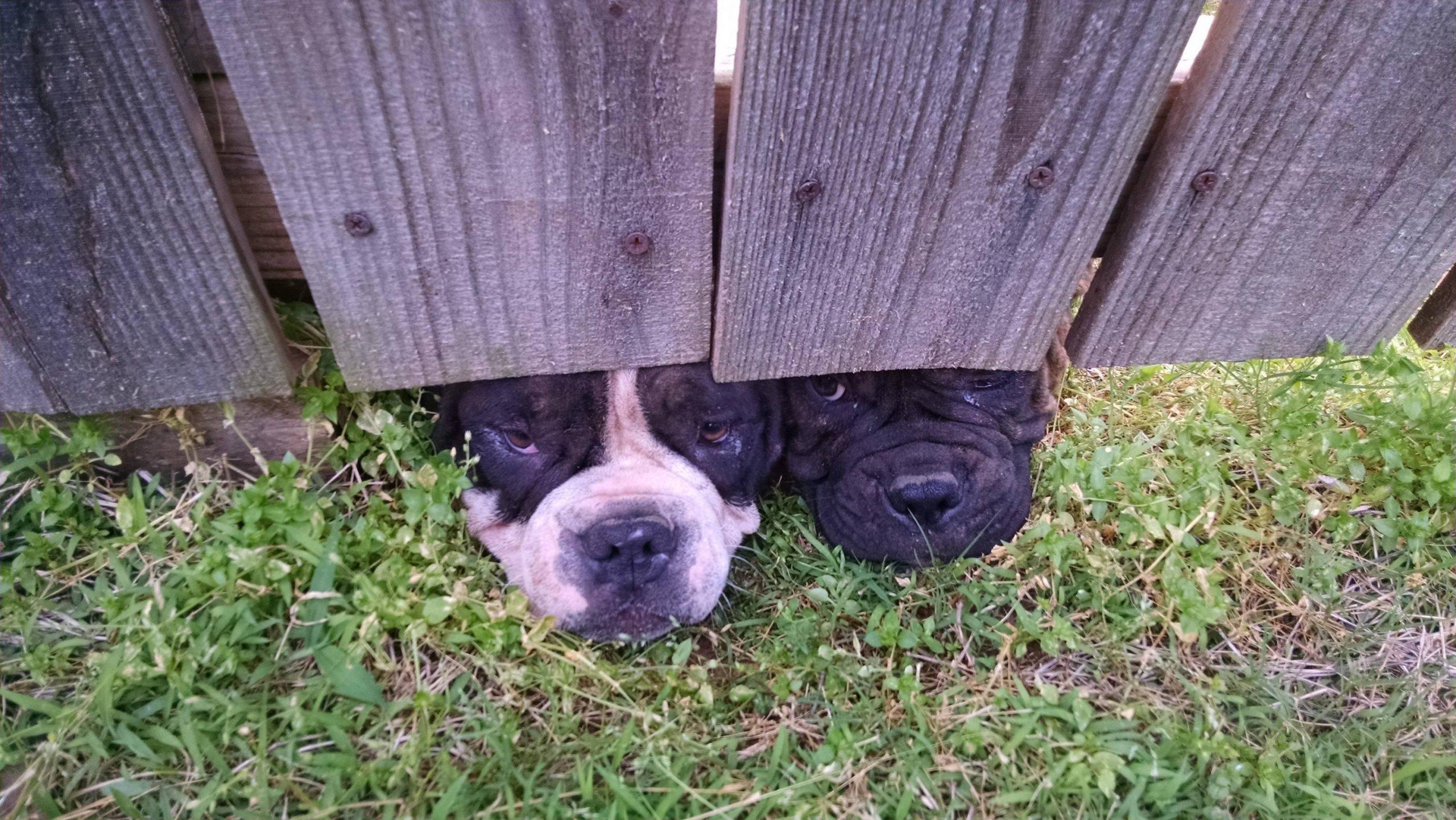 PERROS debajo de valla