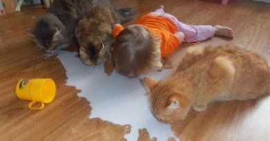 amistad-animales-ninos