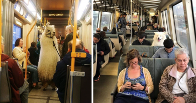 animales-viajando