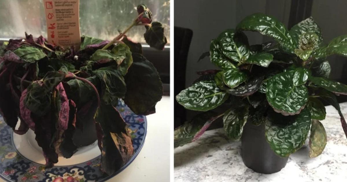 antes-despues-planta