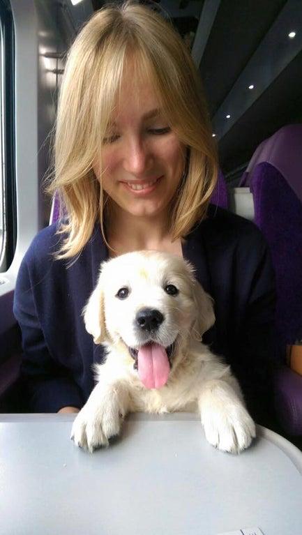 cachorro en tren
