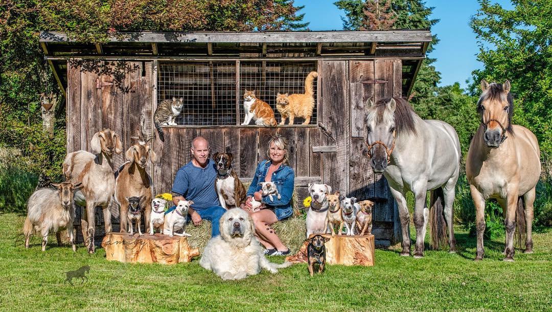 familia animales