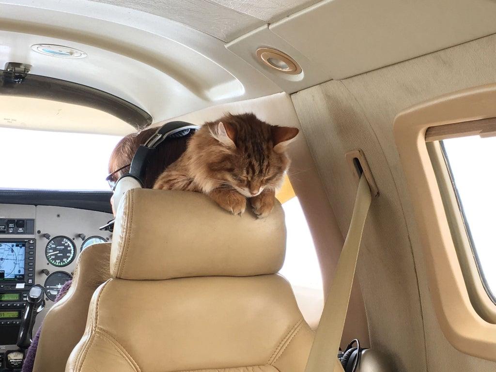 gato durmiendo en asiento