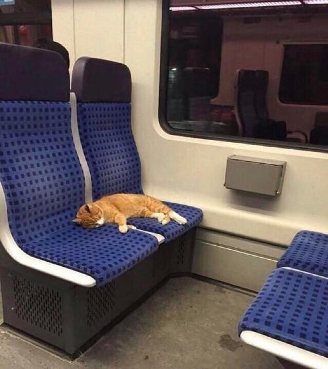 gato durmiendo en tren