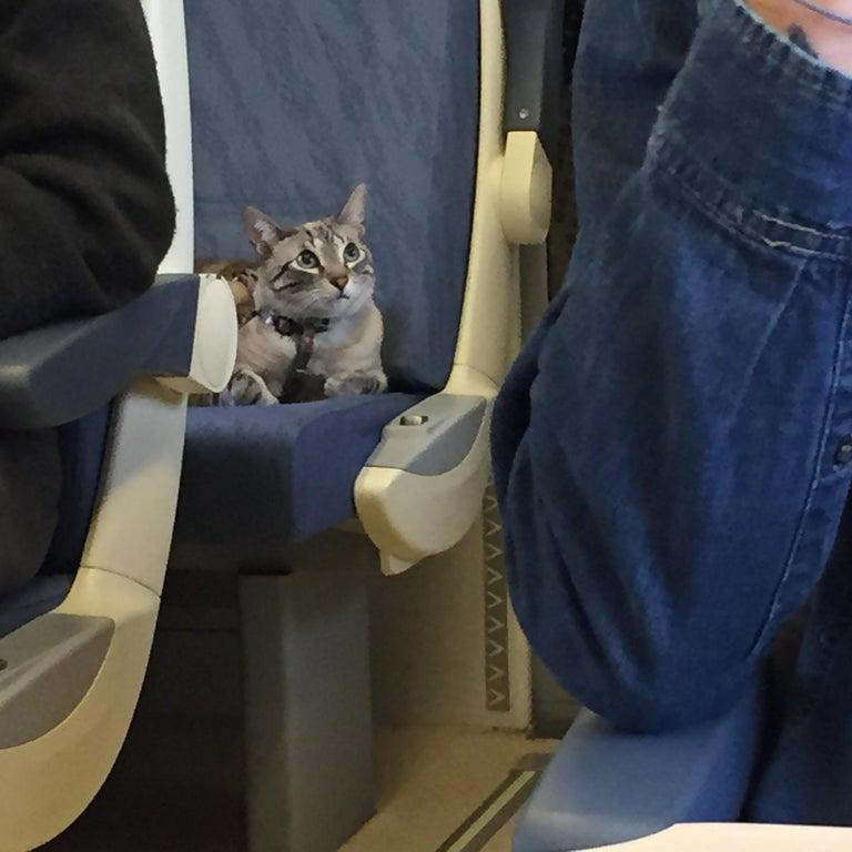 gato en asiento de tren