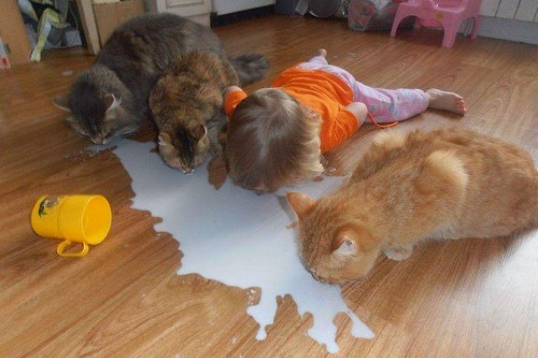 gatos leche