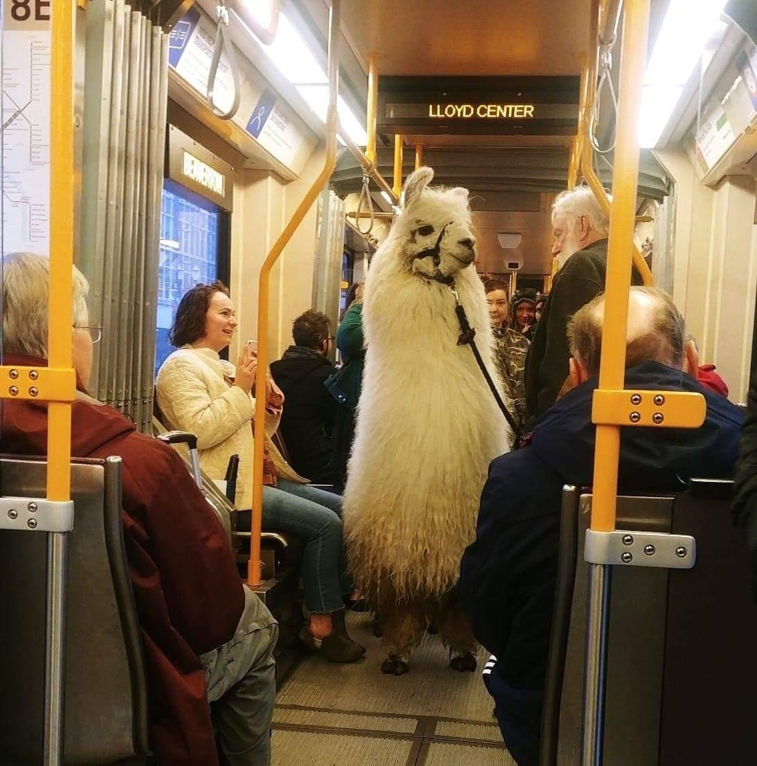 llama en transporte publico