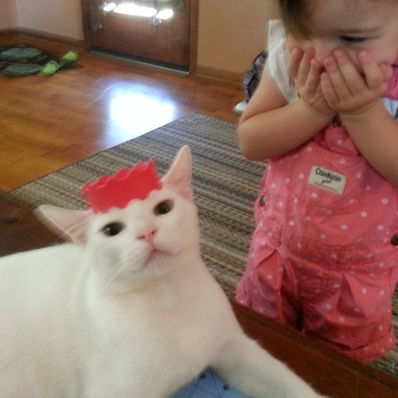 niña gato