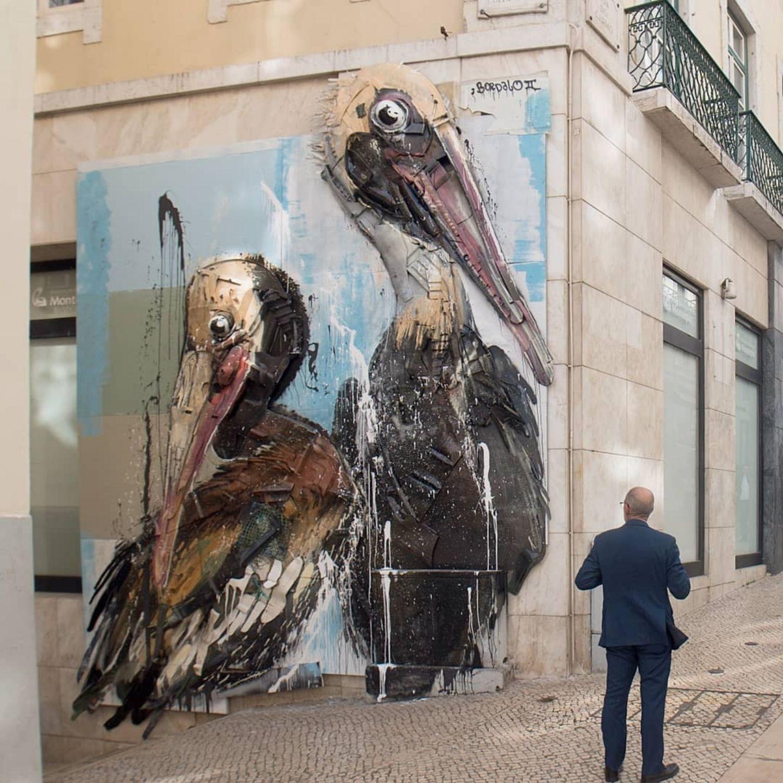 pelicanos basura
