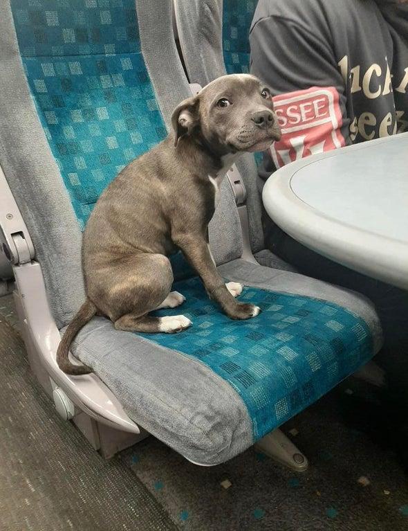 perrita asustada en tren