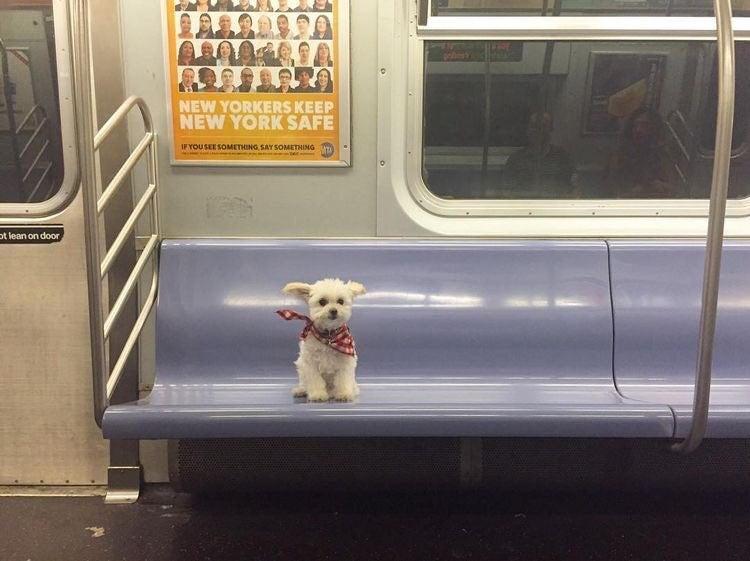 perrita en tren