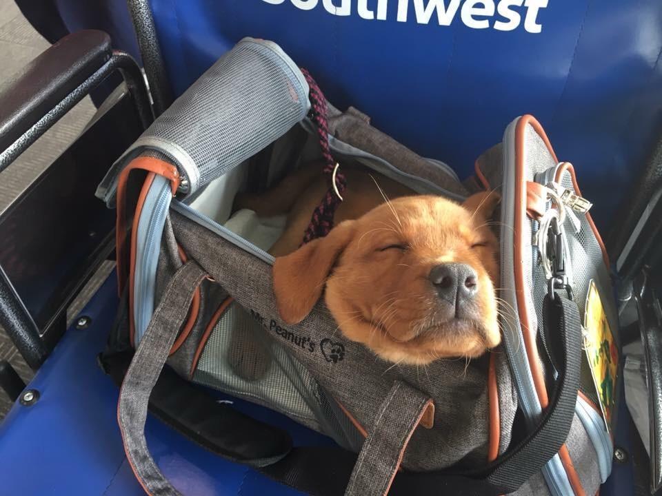 perrito durmiendo en bolsa