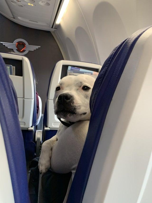 perro asomado en asiento