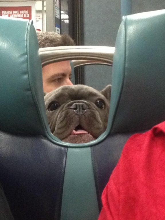 perro asomando en asiento