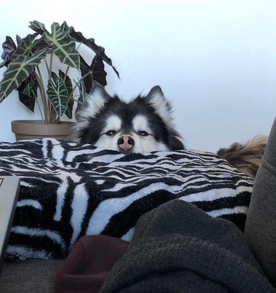 perro cama