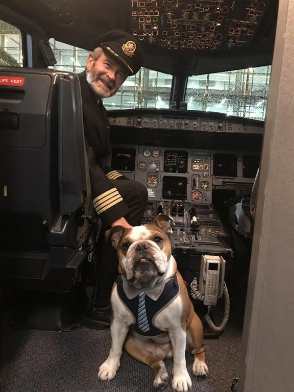 perro con piloto de avion