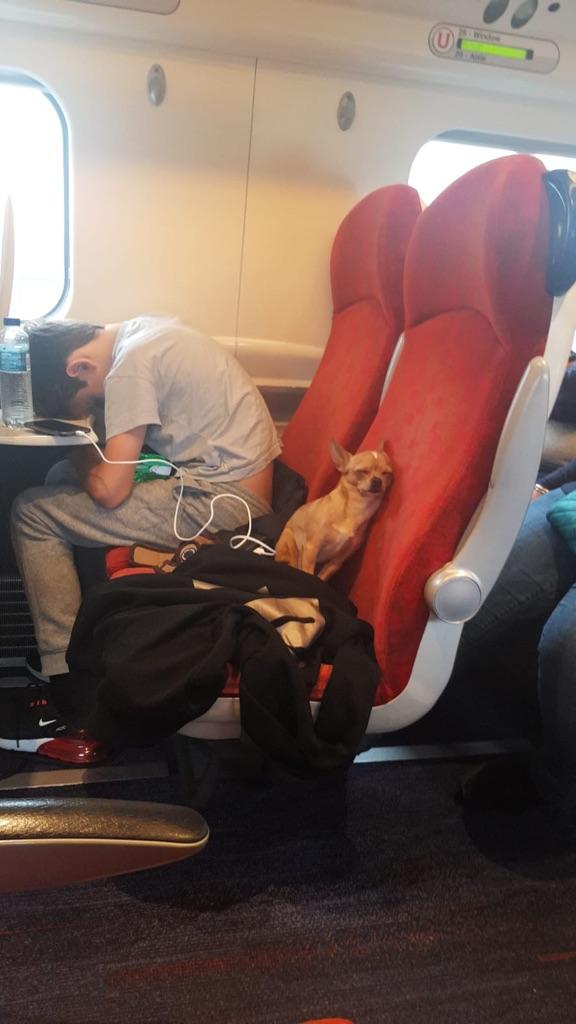perro durmiendo en tren