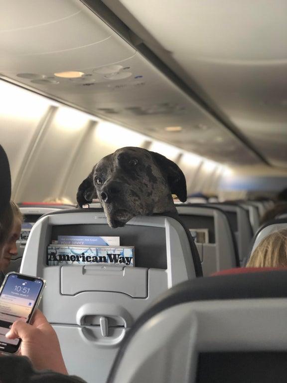 perro en asiento de avion
