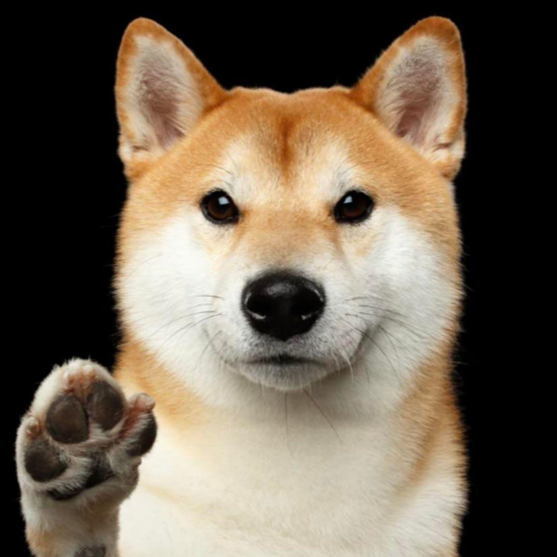perro pata
