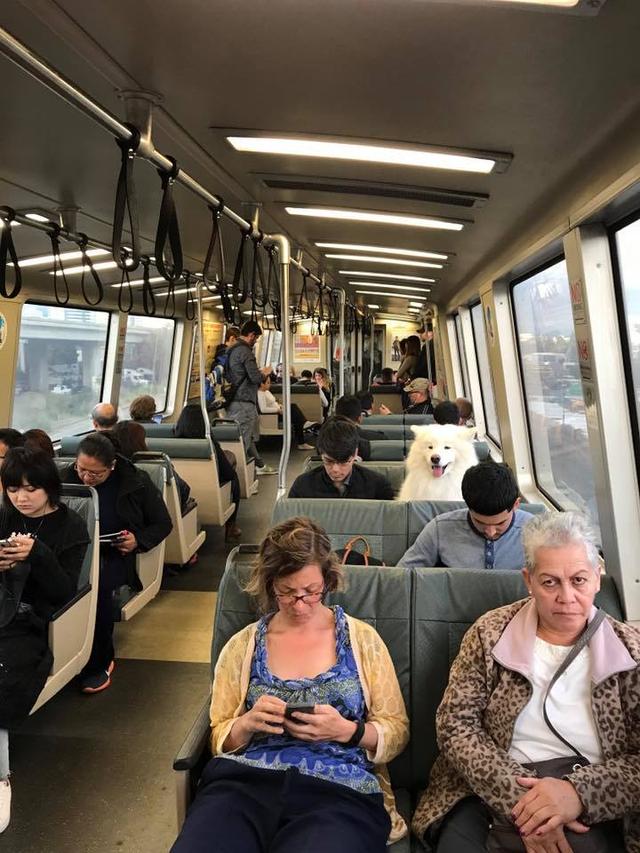 perro sentado en tren